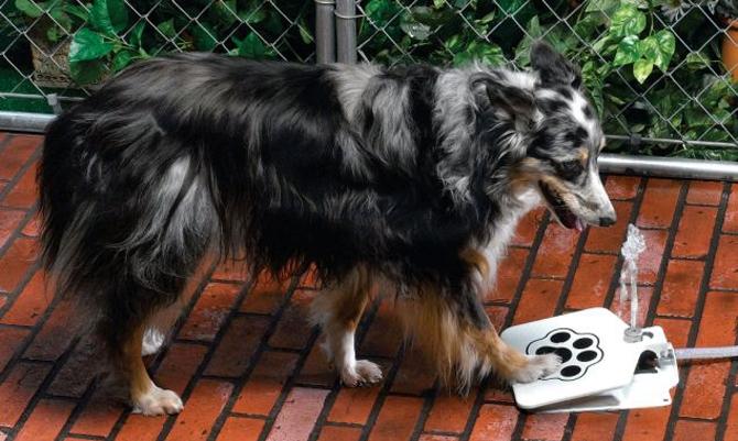 The Doggie Fountain
