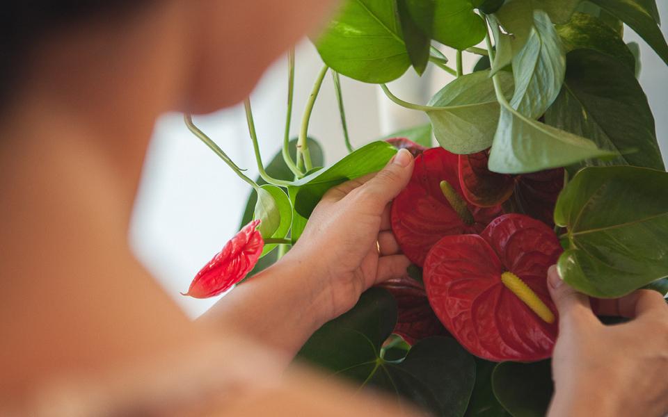 Jardines Citysens, jardines verticales que se autogestionan