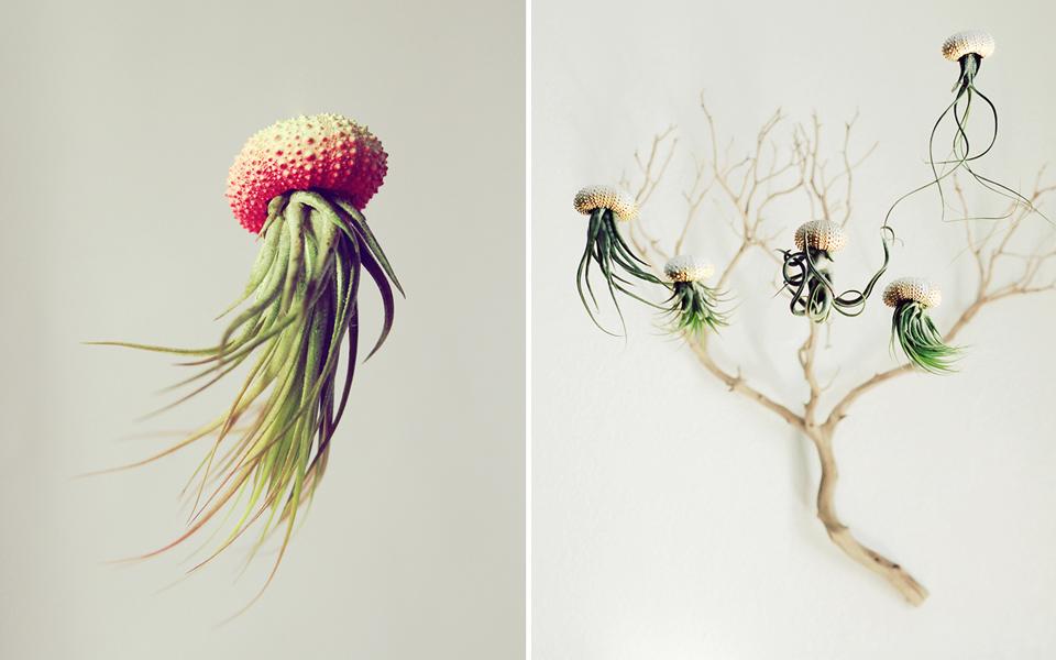 The air plant jellyfish