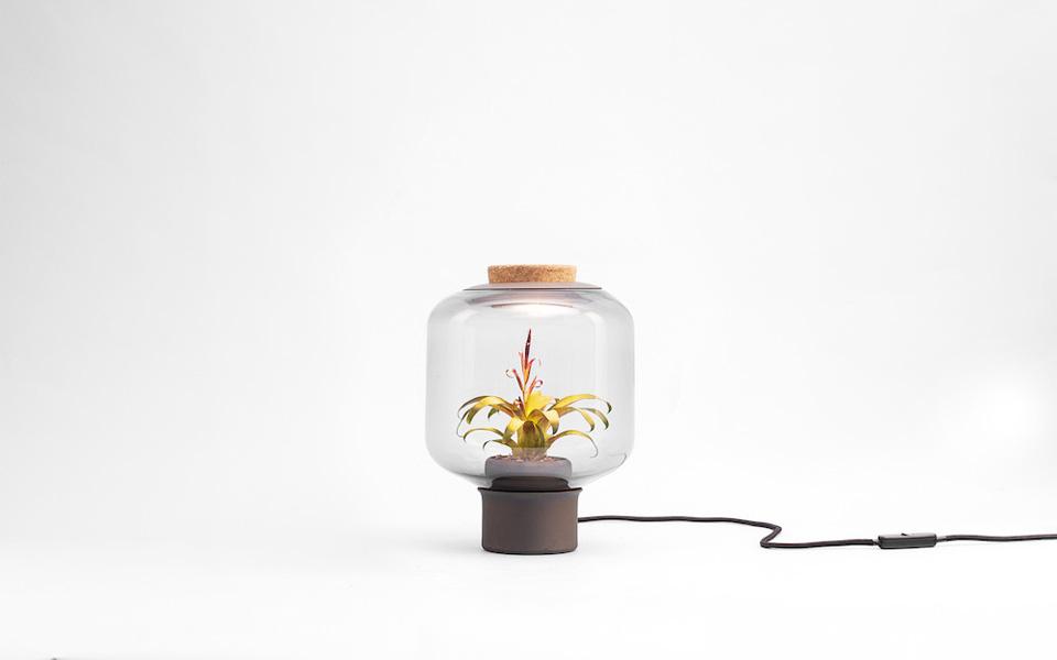terrario lámpara NUi Studio