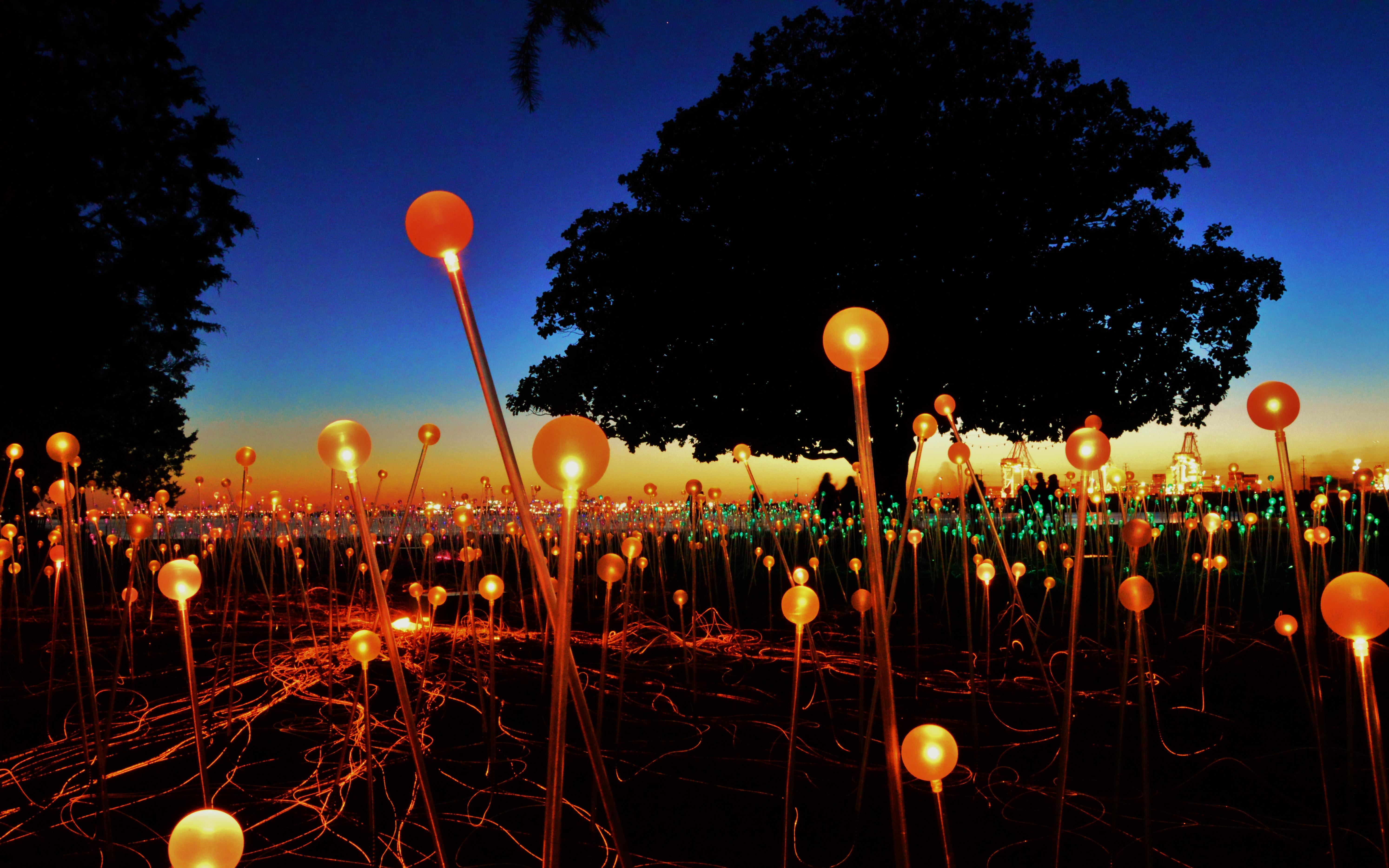 bruce_munro_s__field_of_lights___norfolk__va_by_schaex-d8devrw