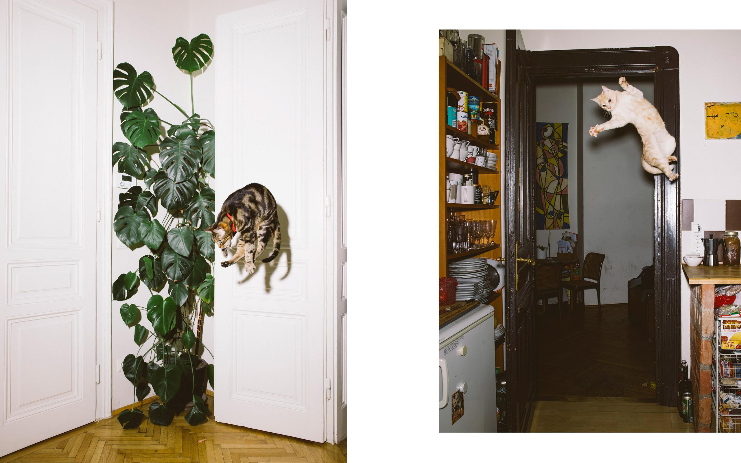 Los gatos voladores de Daniel Gebhart de Koekkoek