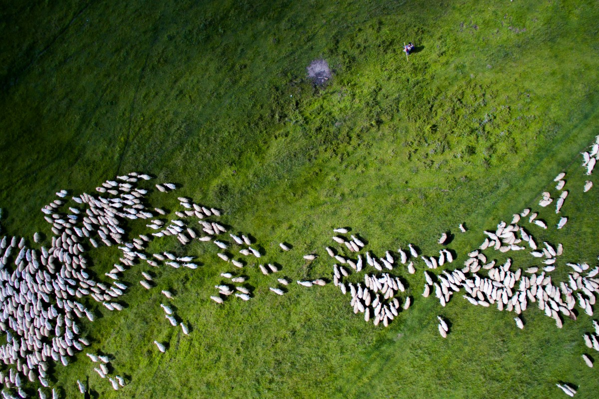 swarm-of-sheep-by-thedon