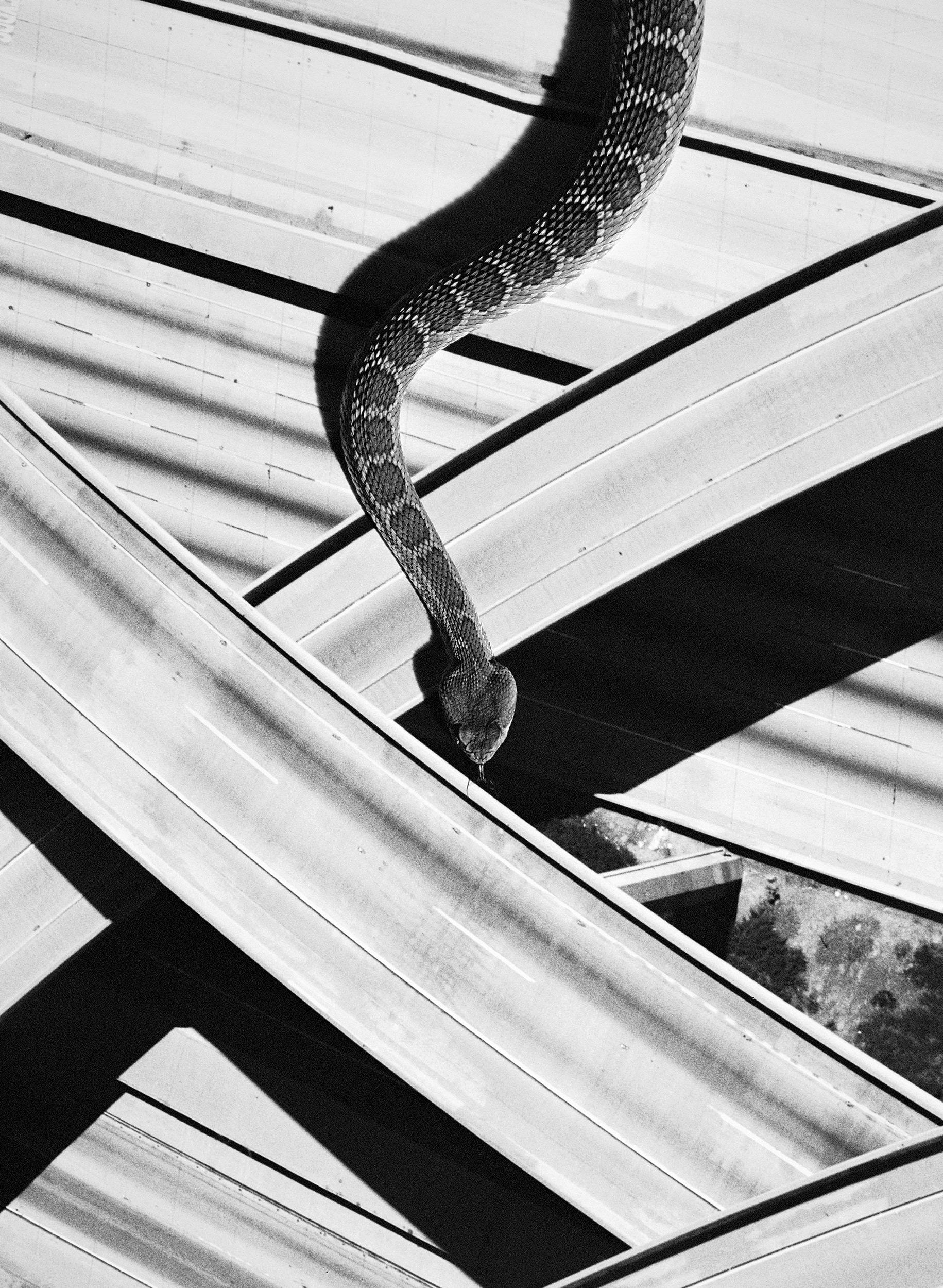 davidblack-cerrogordo-snake1