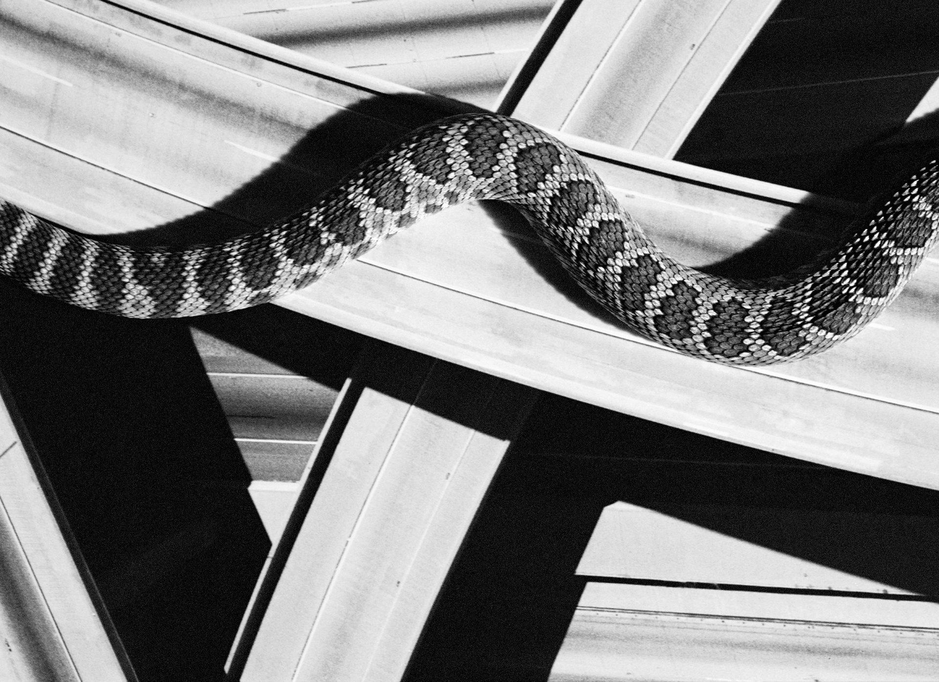 davidblack-cerrogordo-snake2-1920x1396