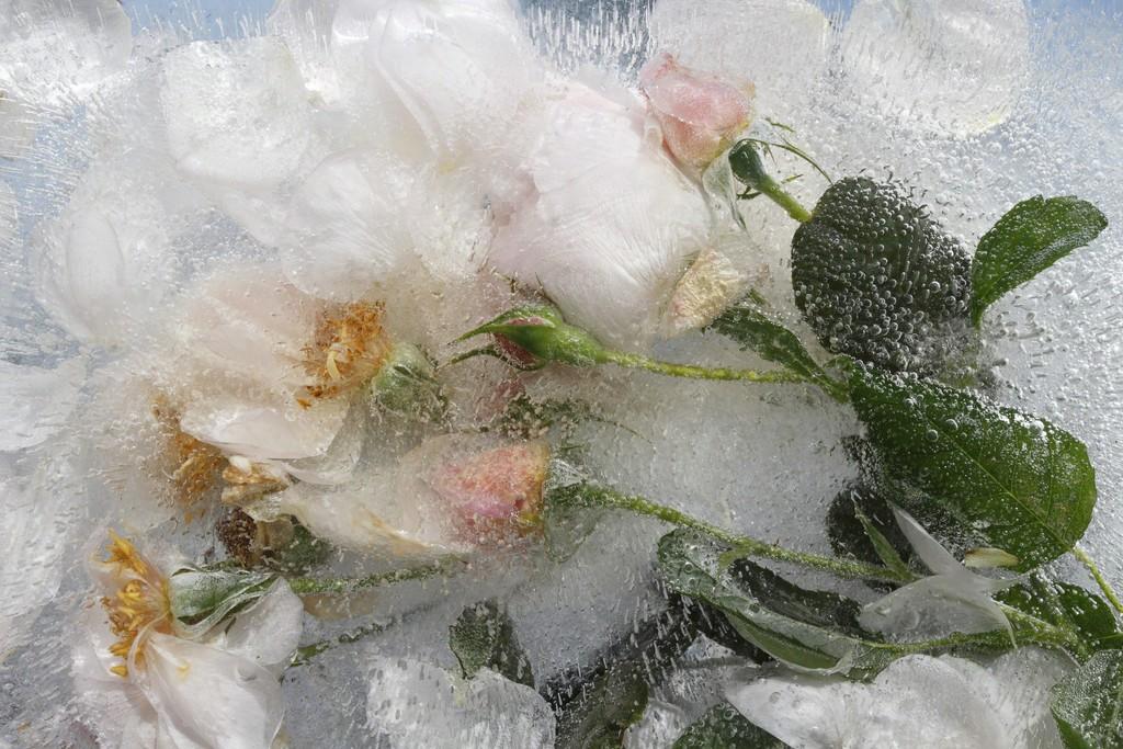 Mary Kocol y el arte de congelar la belleza