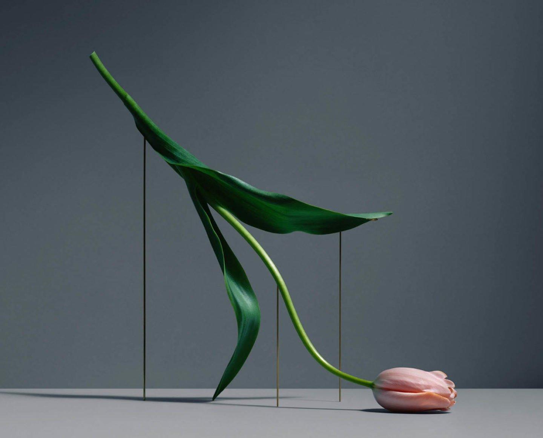 Los tulipanes flotantes de Carl Kleiner