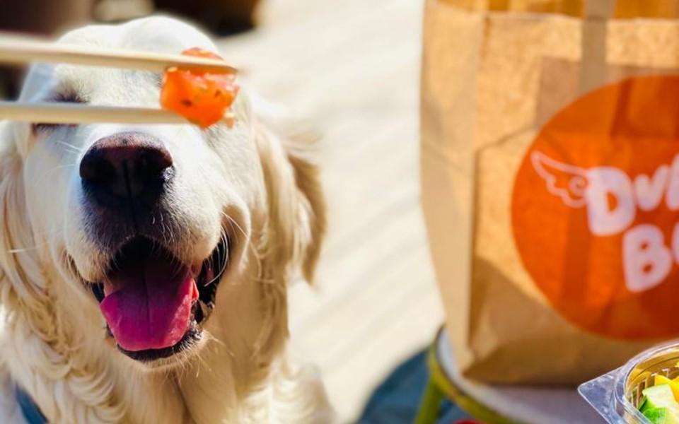 dumbo cafe dog friendly